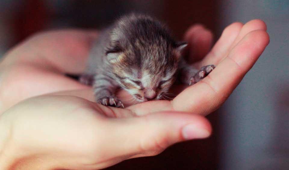 Работники столичного торгового центра хотели утопить новорожденных котят