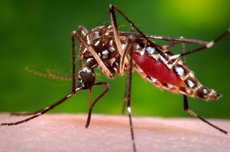 Жительницу Киевской области покусали смертельно-опасные комары