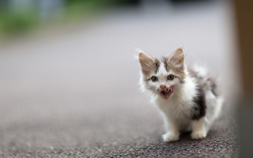 Киевлянин погиб в ДТП, спасая несчастного котенка