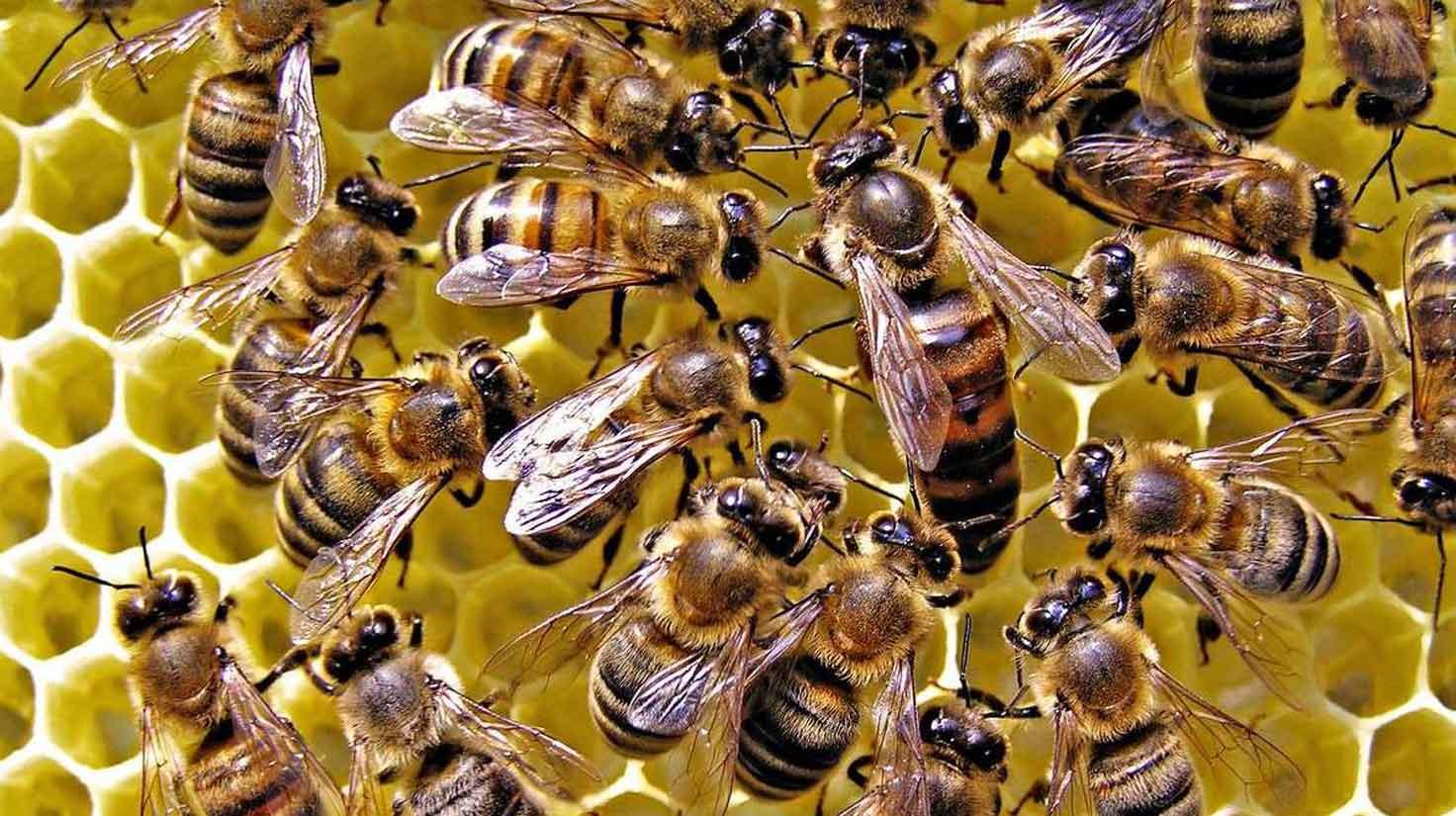 На Киевщине случился химический токсикоз. Погибли пчелы