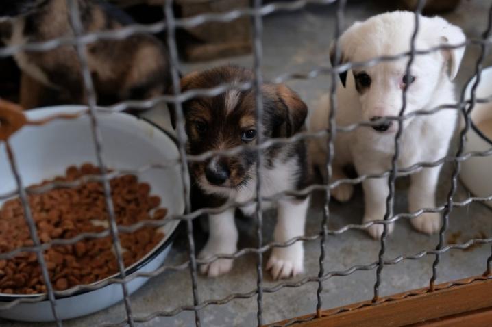 В Киеве построят многофункциональный центр для животных