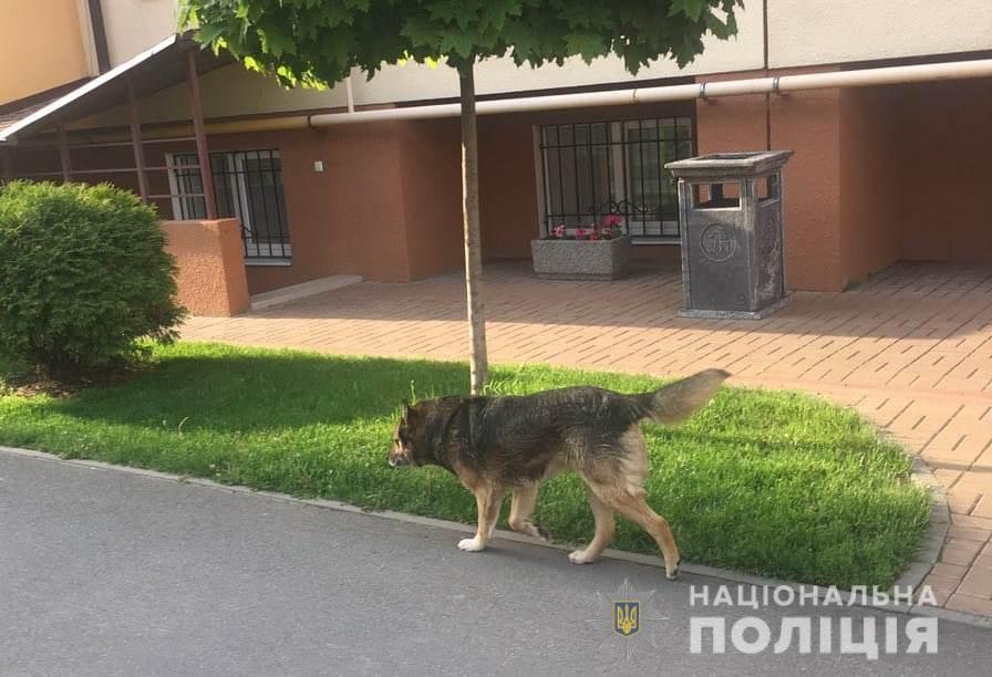 Под Киевом собака напала на маленькую девочку и сильно покусала