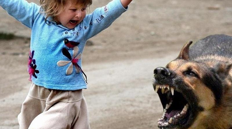 Стали известны подробности нападения собаки на 7-летнего ребенка под Киевом