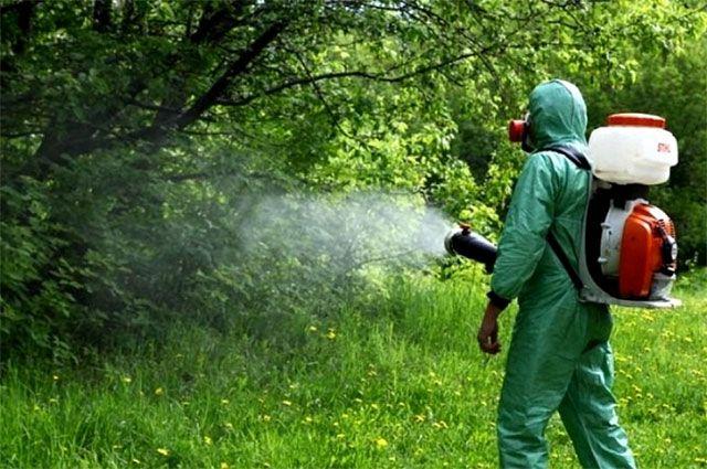 Киевские парки начали обрабатывать от клещей
