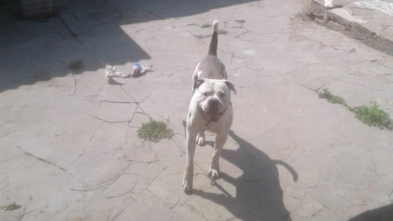 На Киевщине собака сломала плечо пожилой женщине