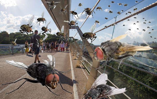 """На """"мосту Кличко"""" поселились мухи: мэр все отрицает"""