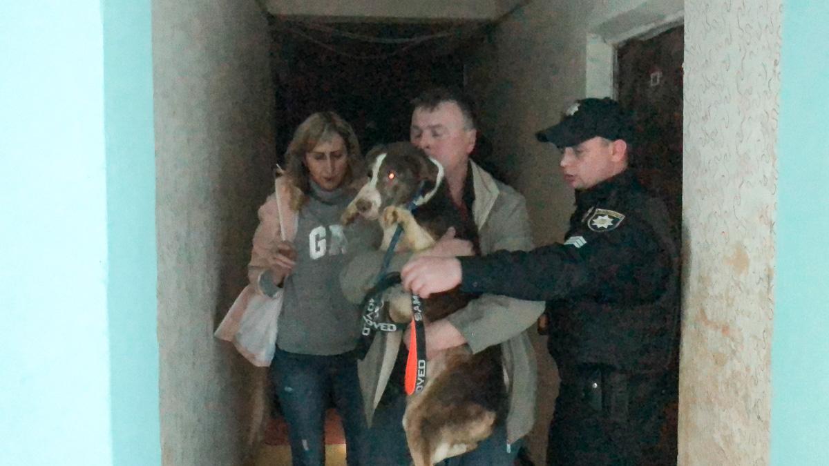 В Киеве мужчина заморил стаю бродячих собак у себя в квартире