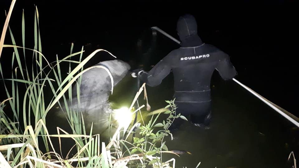 На Осокорках в озере утопился конь