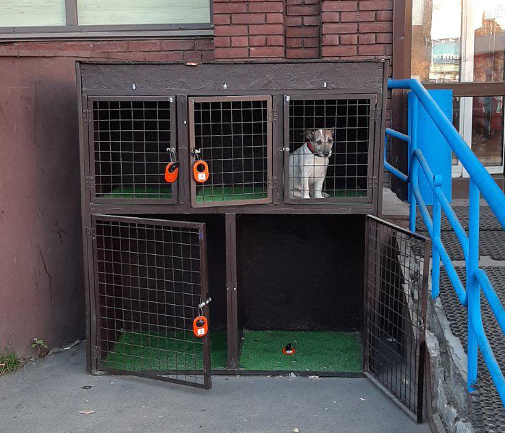 Возле супермаркета в Киеве появились камеры для собак
