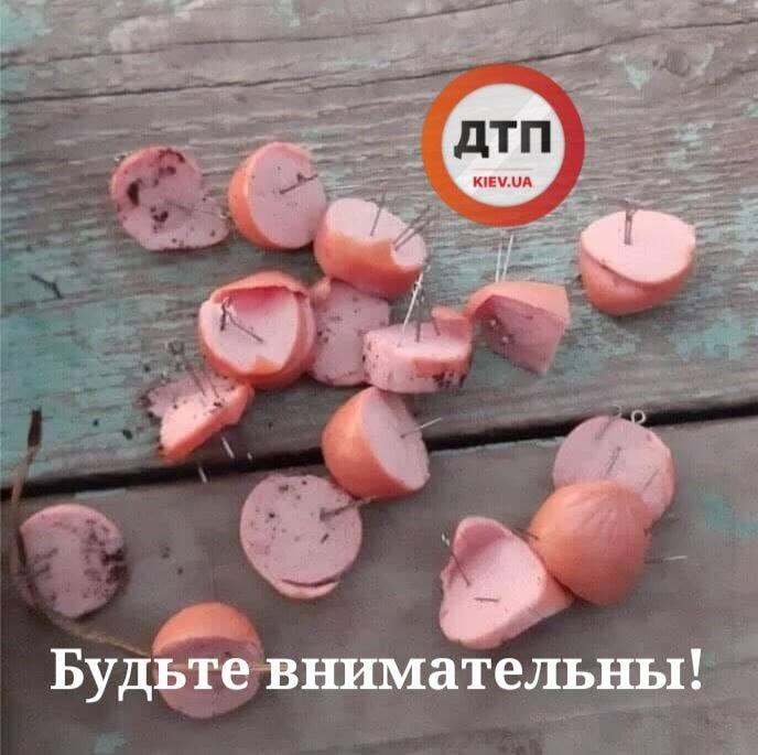 В Киеве собакам подбрасывают сосиски с иглами