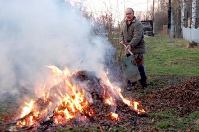 В Киеве построят завод для сжигания опавшей листвы