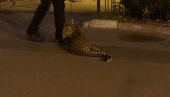 В Киеве на улице обнаружили опасное животное