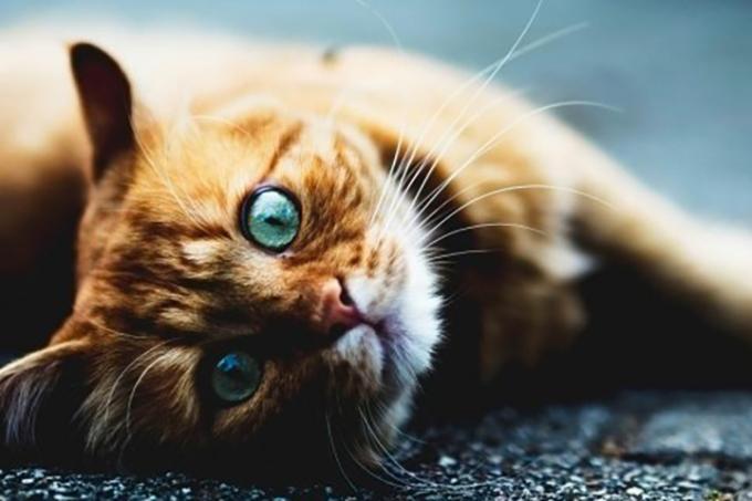 На Нивках неизвестные отравили кошек