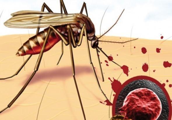 В Киеве зафиксировали случай заболевания малярией