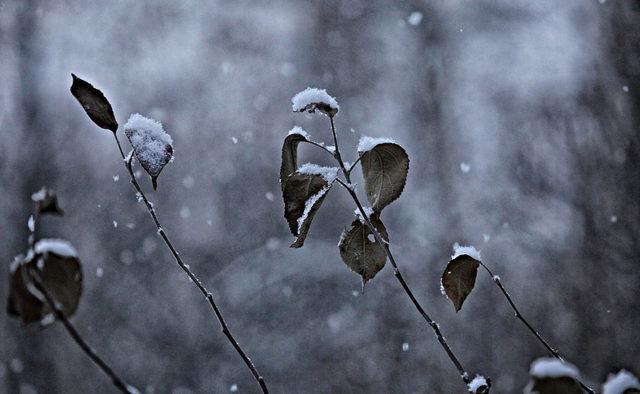 Синоптик рассказала, когда в Киеве выпадет снег