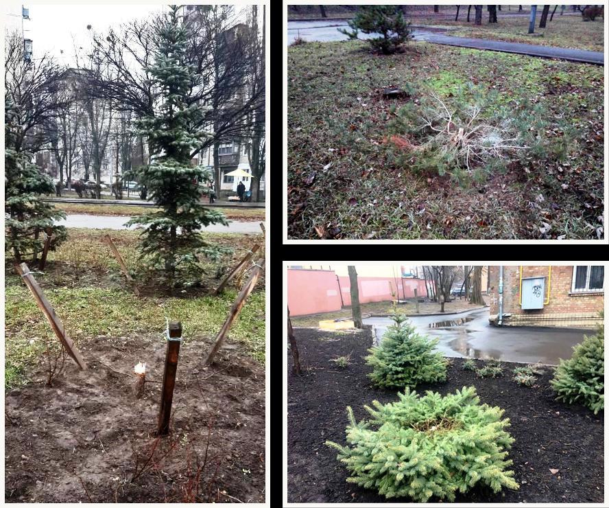 В трех районах Киева неизвестные украли елки на Новый год