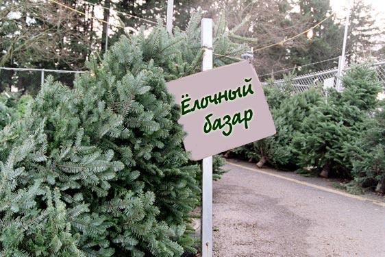 В Киеве запретят стихийные елочные базары