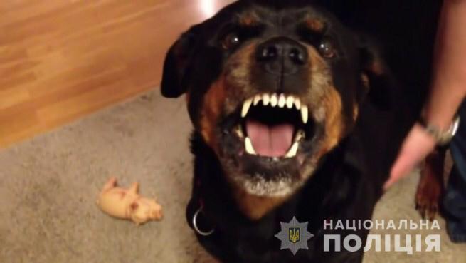 Под Киевом собака насмерть загрызла местного жителя