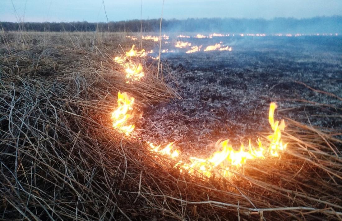 На Киевщине мужчина пошутил и спалил 5 гектар травы