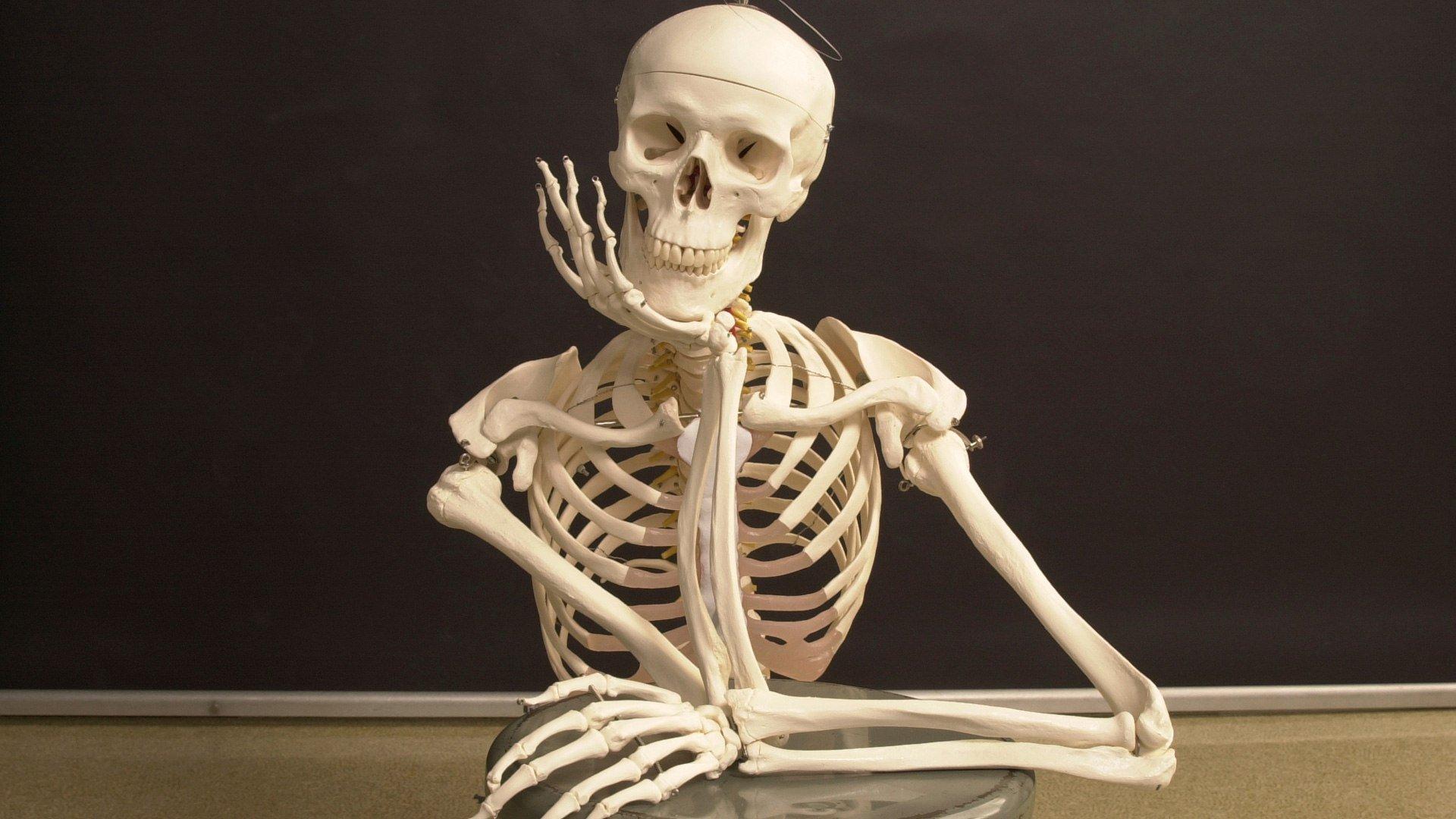 На Виноградаре прохожие нашли скелет мужчины
