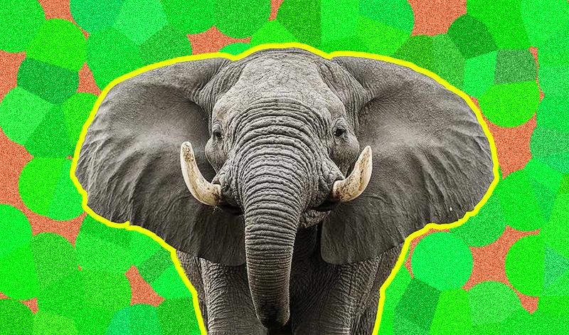 Киевляне могут подсматривать за слоном в столичном зоопарке
