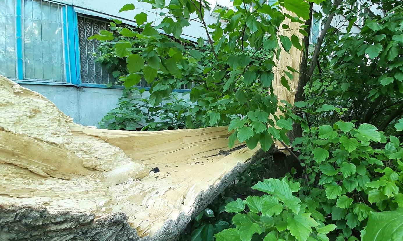 На проспекте Победы во время жары упало огромное дерево