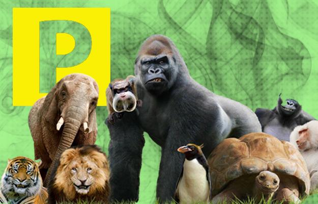 В киевском зоопарке в конце сентября откроют платный паркинг