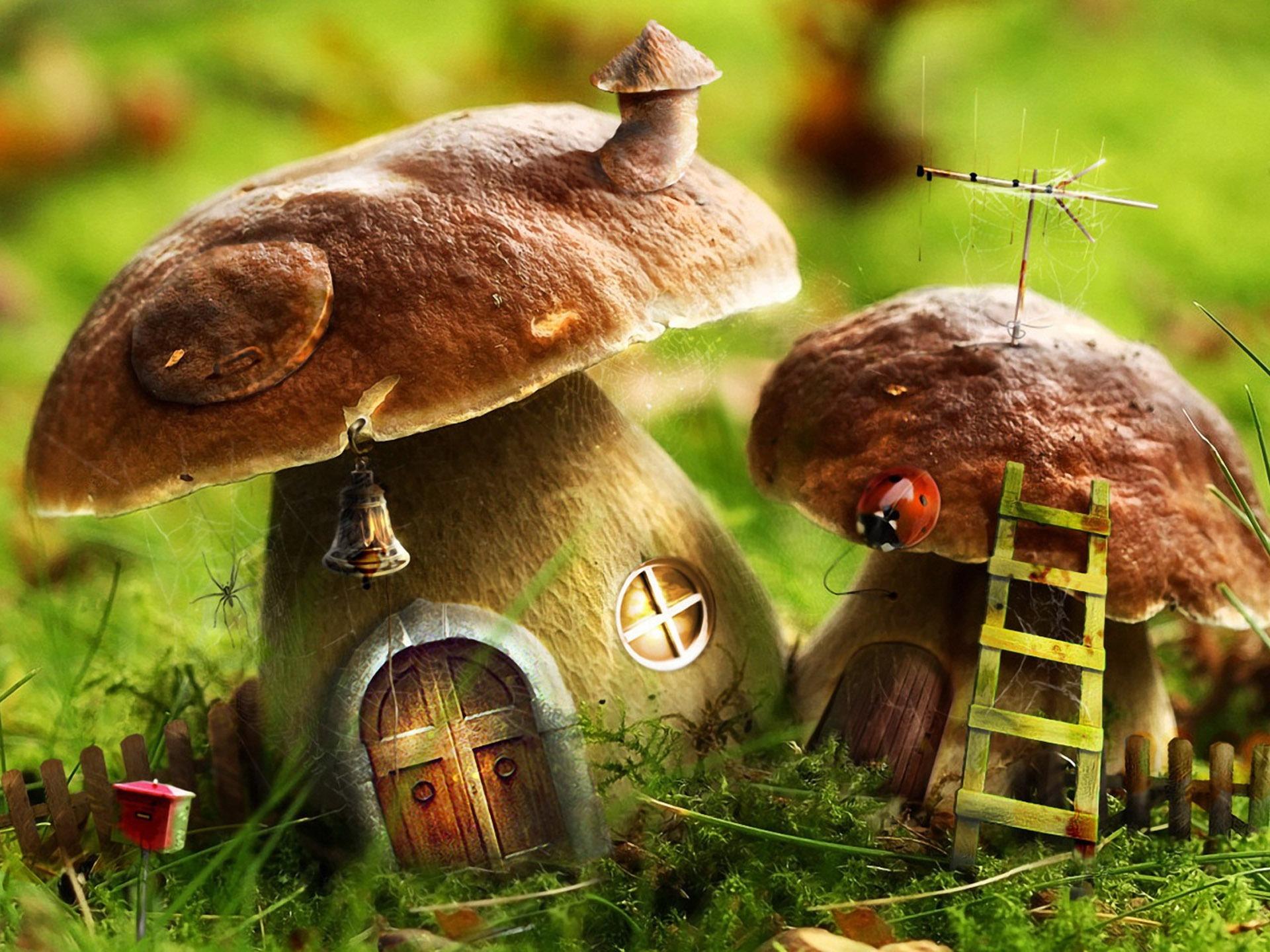 """Под Киевом пока """"горе-мать"""" потеряла годовалого ребенка, собирая в лесу грибы"""