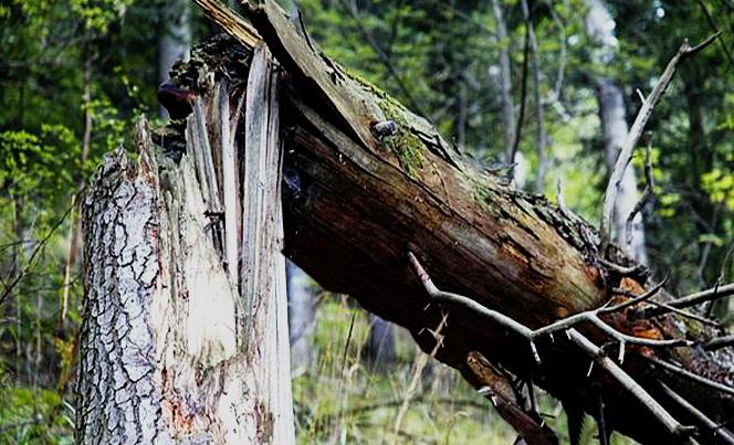 В Киеве на проезжающие автомобили упало дерево. Есть пострадавшие