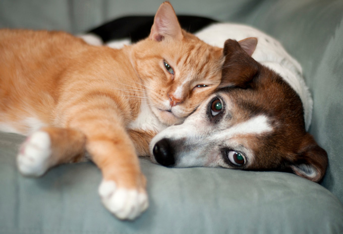 В Киеве обустроят кладбище для собак и кошек