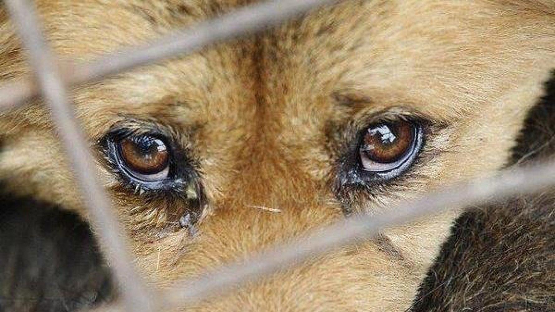 Киевлянин избил собаку в подъезде дома и выкинул ее на мороз