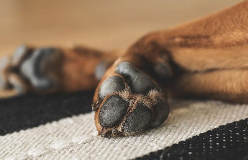 В Киеве пьяный мужчина задушил трех щенков