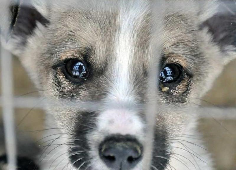 Под Киевом живодеры жестоко убили уличного пса