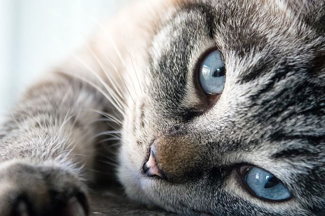 На Троещине мужчина выкинул из окна кошку с котятами