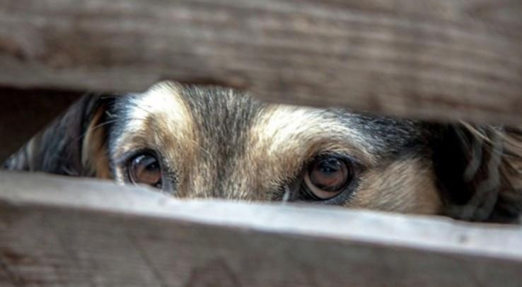 Киевлянин убил собаку, выбросив ее из окна