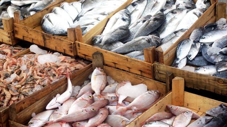 Публичные тендеры на поставку рыбы: как искать заказчиков и принимать участие