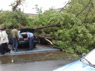 В Киеве дерево упало на две машины